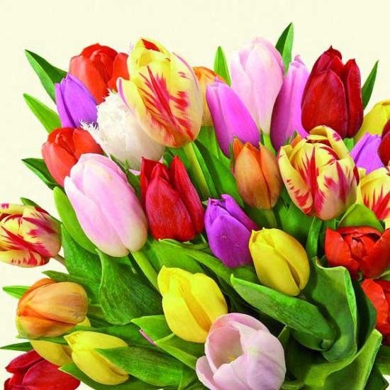 Servetten met tulpen 20 stuks bij Fun en Feest Belgi